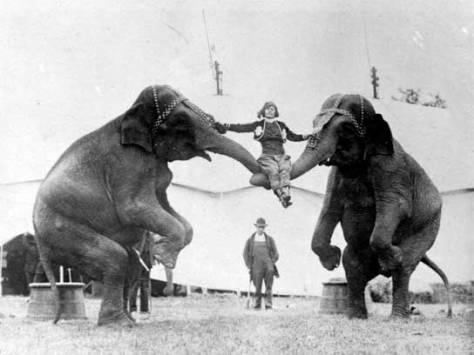 06-vintage-circus-elephant-seat-fsl